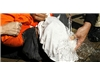 CIA's torture documents released
